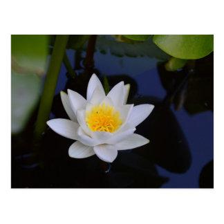 The White Lotus Card Postcard