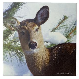 The White-tailed deer (Odocoileus virginianus), Ceramic Tiles