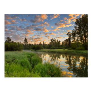 The Whitefish River with nice sunrise clouds Postcard