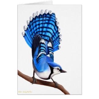 The Wild Blue Jay Bird Card