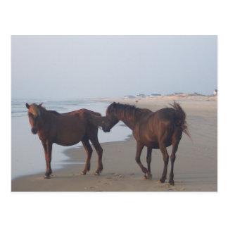 The Wild Horses of Carova Beach Postcard