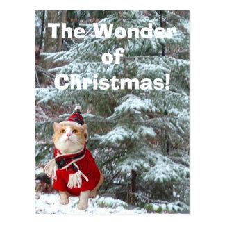 The Wonder of Christmas! Postcard