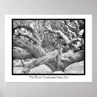 """The Woods"" Cumberland Island, GA Poster"