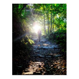 The woods of O Cebreiro Postcard