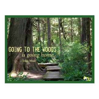 The Woods (Olympic N.P.) Postcard
