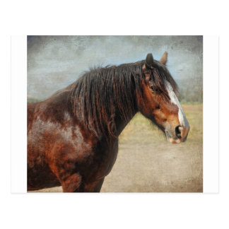 The working horse postcard