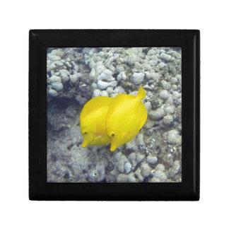 The Yellow Tang Fish Gift Boxes
