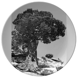 The Yosemite Porcelain Plates