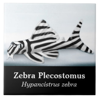 The Zebra Plecostomus Fish Tile