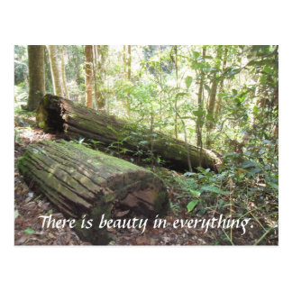There is beauty in everything. postcard
