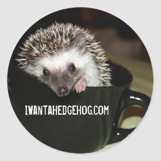 There's a Hedgehog in my coffee Round Sticker