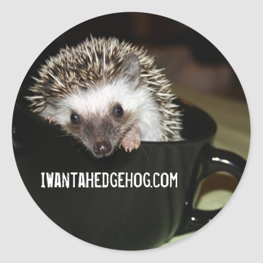 There's a Hedgehog in my coffee Sticker