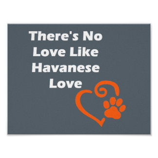 There's No Love Like Havanese Love Poster