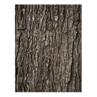 Thick Tree Bark Postcard
