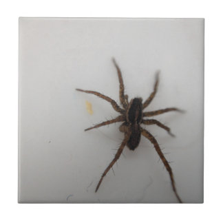 Thin legged wolf spider tile