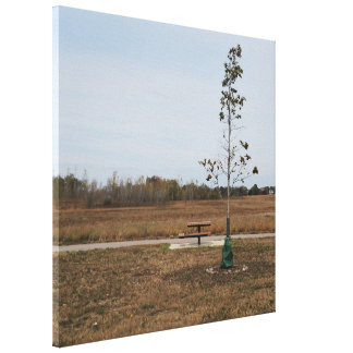 Thin Tree in the Prairie Canvas Print