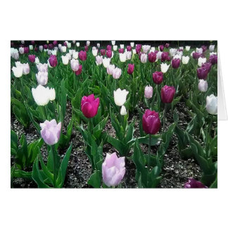 Thinking about You, Friendship Purple Tulips Card