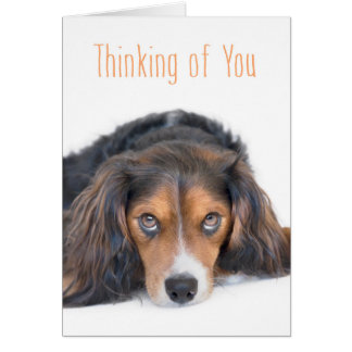 Thinking of You - Beautiful Dog with Soulful Eyes Card