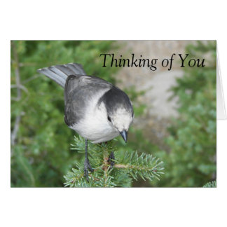 Thinking of You Bird Friendship Greeting Card