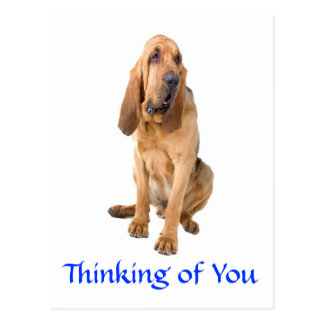 Thinking of You Bloodhound Dog Greeting Postcard