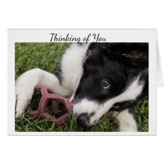Thinking of You Border Collie Puppy Greeting Card