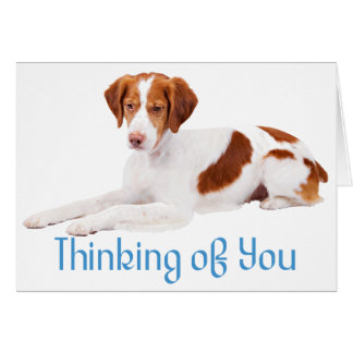 Thinking Of You Brittany Spaniel Puppy Dog Card