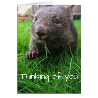 Thinking of you card! Cute wombat, wildlife card