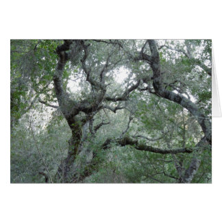 Thinking of You Card Tangled Oak Trees