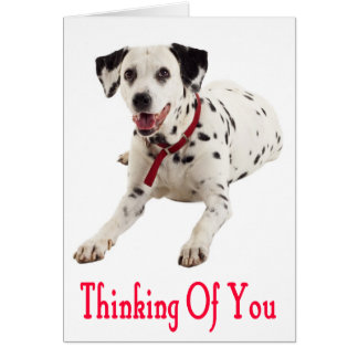 Thinking of You Dalmatian Puppy Dog Greeting Card