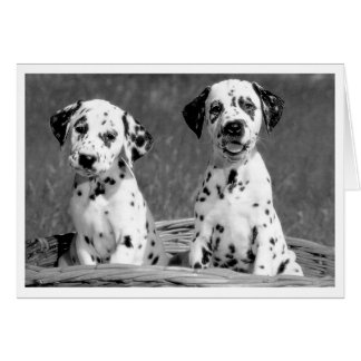 Thinking of You Dalmatian Puppy Dog Hello Card