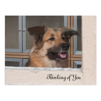 Thinking of You Dog Post Card