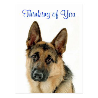 Thinking Of  You German Shepherd  Doggy  Postcard