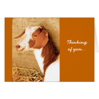 Thinking of You Goat Card
