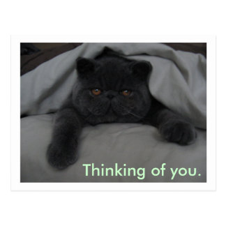 Thinking of You - I Miss You - Cat Postcard