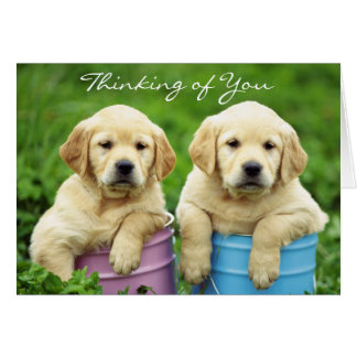 Thinking of You Labrador Retriever Puppies Card
