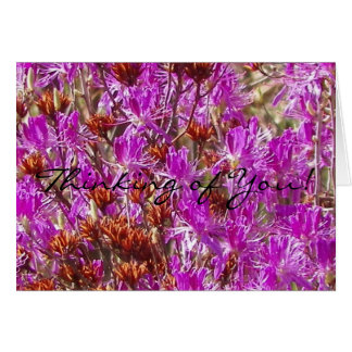 Thinking of You! Lambs Kill Wildflower Card