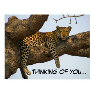 Thinking of You (Leopard in a Tree) Postcard