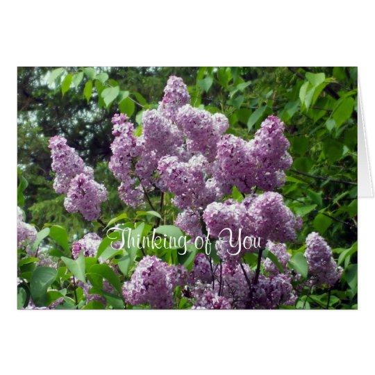 Thinking of You-Lilac Bush Card