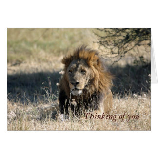Thinking of You Lion Note Cards