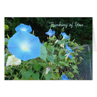 Thinking of You...Morning Glories Notecard