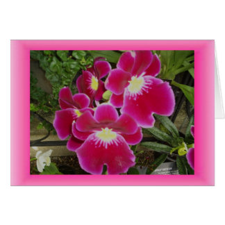 Thinking of You, Orchids Greeting Card