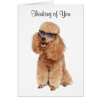 Thinking of You Poodle Greeting Card - Verse