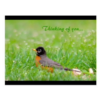 Thinking of you... postcard