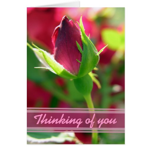 Thinking of you red rose bud greeting card | Zazzle