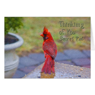 Thinking of You - Secret Pal -  Red Cardinal Greeting Card