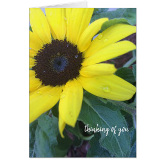 Thinking of You Sunflower Greeting Card
