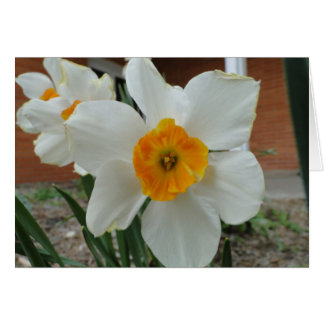 Thinking of You, White Daffodils Card