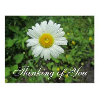 Thinking of You Wild Flower Daisy Postcard
