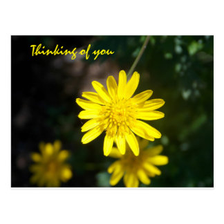 Thinking of you - Yellow Daisy Postcard