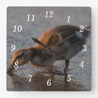 Thirsty Baby Square Wall Clock